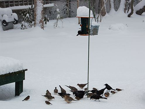 birds and birdfeeder