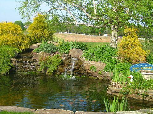 Tthe pond