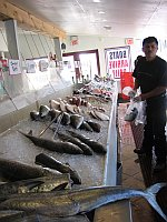 a display of fresh finfish for sale