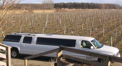 A limo parked in a vineyard