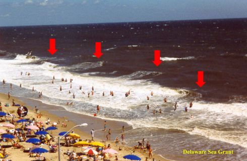 Multiple rip currents