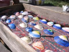 A picture of sea shells