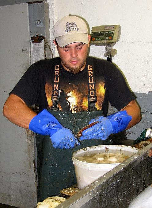 a fisherman shucking sea scallops