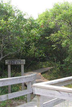 The Sunken Forest Trailhead